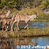 2012-Botswana-0728-2570