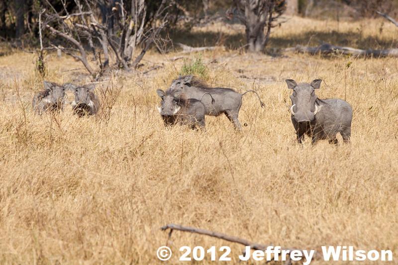 2012-Botswana-0730-3919