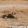 2012-Botswana-0731-4220