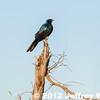 2012-Botswana-0727-2438