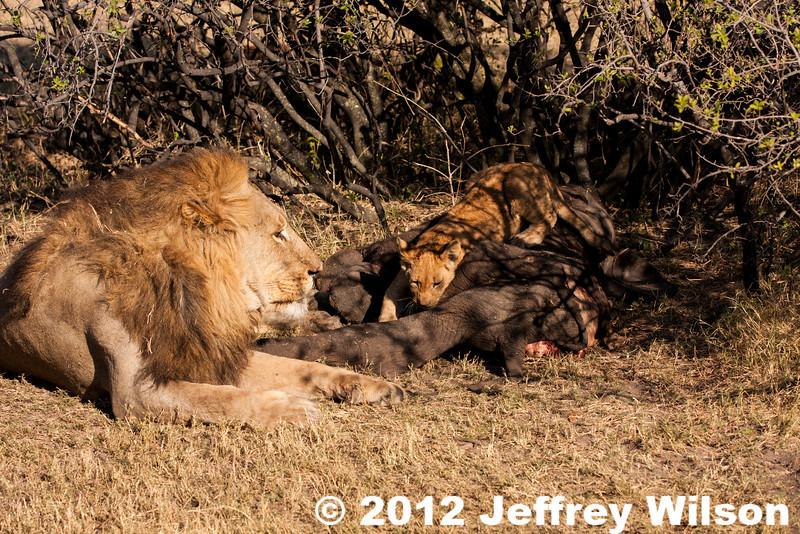 2012-Botswana-0724-0408