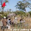 2012-Botswana-0721-9294