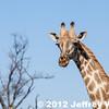 2012-Botswana-0727-2337