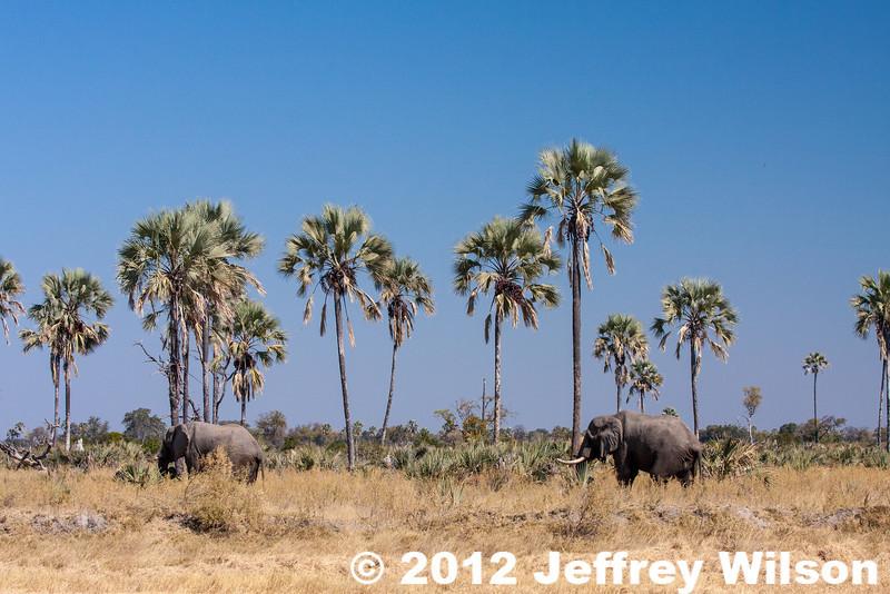 2012-Botswana-0722-9959
