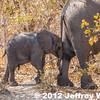 2012-Botswana-0731-4286