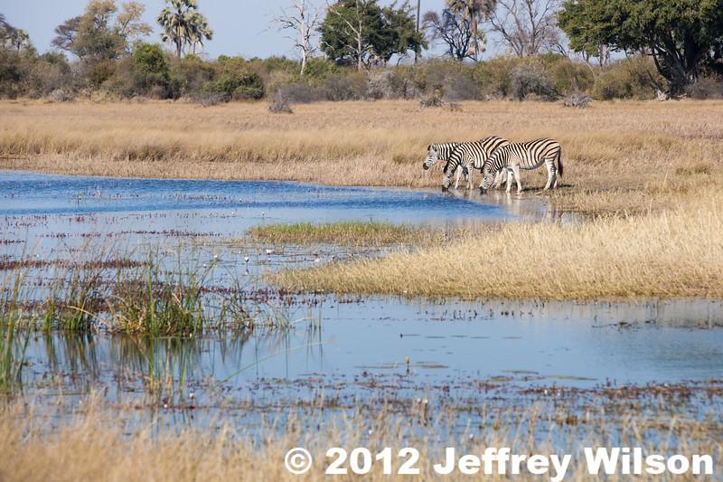 2012-Botswana-0727-2186