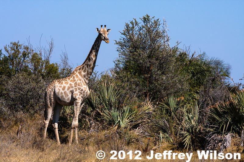2012-Botswana-0722-9926