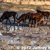 2012-Botswana-0729-3690