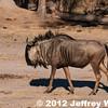 2012-Botswana-0722-0049