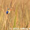 2012-Botswana-0728-2497