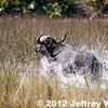 2012-Botswana-0721-9341