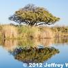 2012-Botswana-0728-2502