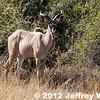 2012-Botswana-0727-2224