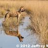 2012-Botswana-0731-4136