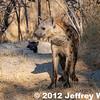 2012-Botswana-0730-3836