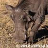 2012-Botswana-0722-9986