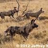 2012-Botswana-0731-4203