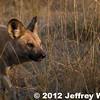 2012-Botswana-0731-4073