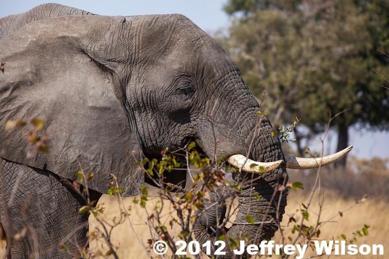 2012-Botswana-0730-3899