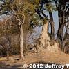 2012-Botswana-0729-3682