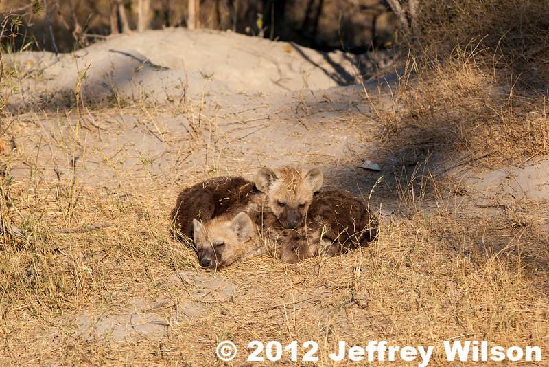 2012-Botswana-0730-3791