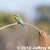 2012-Botswana-0720-9134