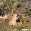 2012-Botswana-0727-2374