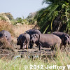 2012-Botswana-0721-9372