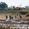 2012-Botswana-0721-9333