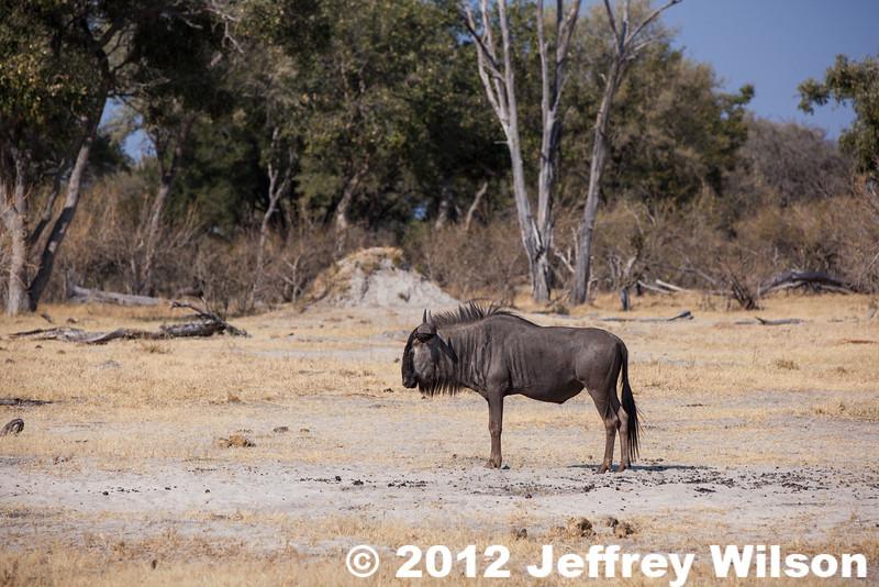 2012-Botswana-0801-4551