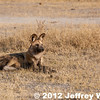 2012-Botswana-0731-4213