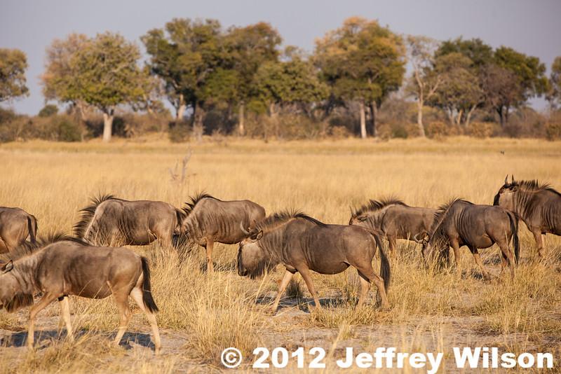 2012-Botswana-0730-3763