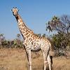 2012-Botswana-0727-2341