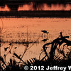 2012-Botswana-0721-9213