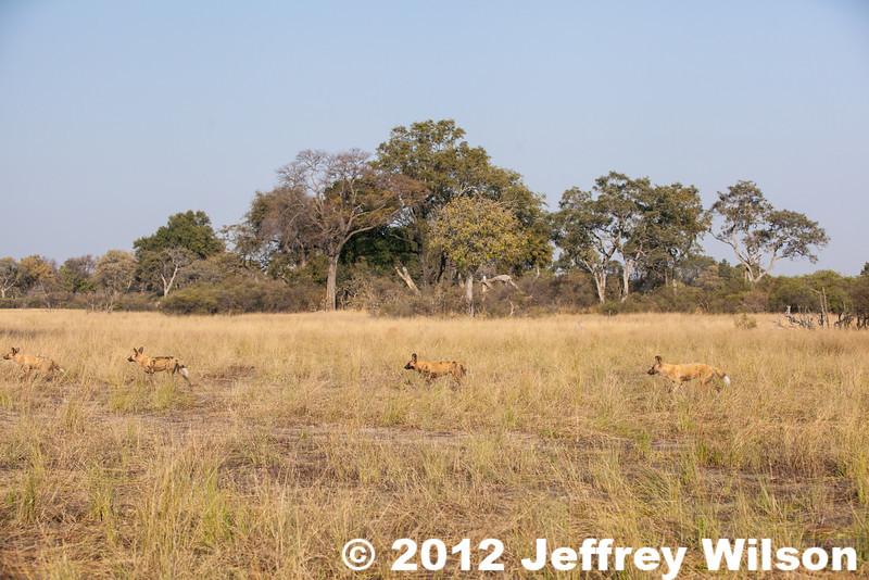 2012-Botswana-0731-4199