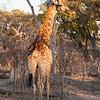 2012-Botswana-0723-0254
