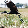 2012-Botswana-0721-9391