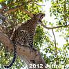 2012-Botswana-0728-2856