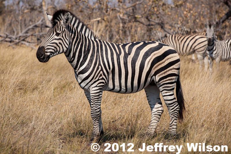 2012-Botswana-0730-3929