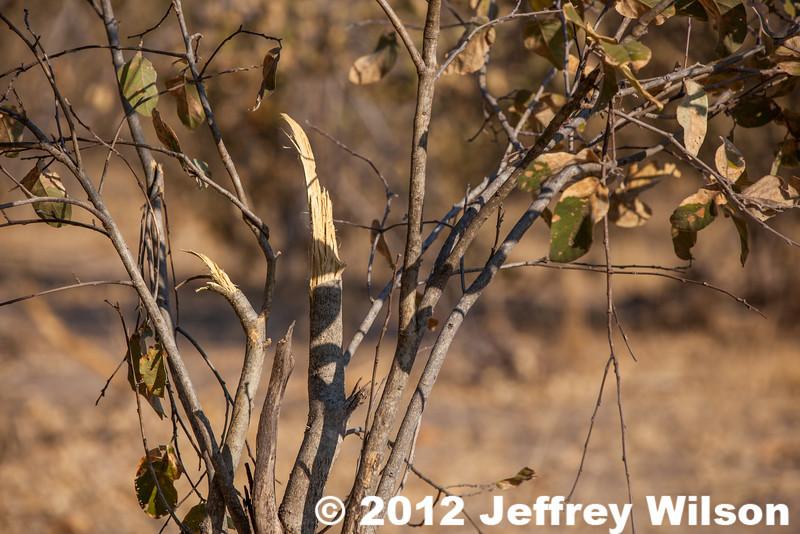 2012-Botswana-0801-4478