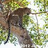 2012-Botswana-0728-2863