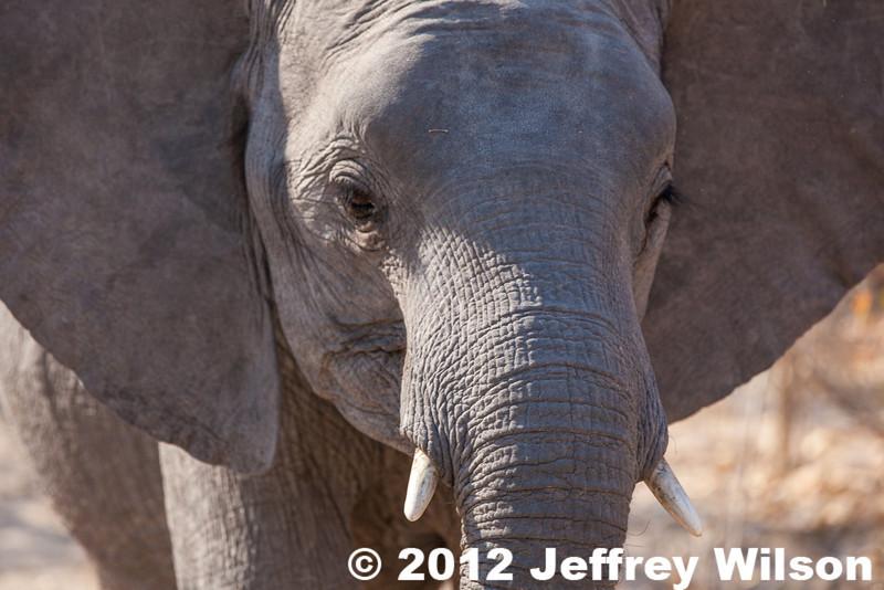 2012-Botswana-0731-4266