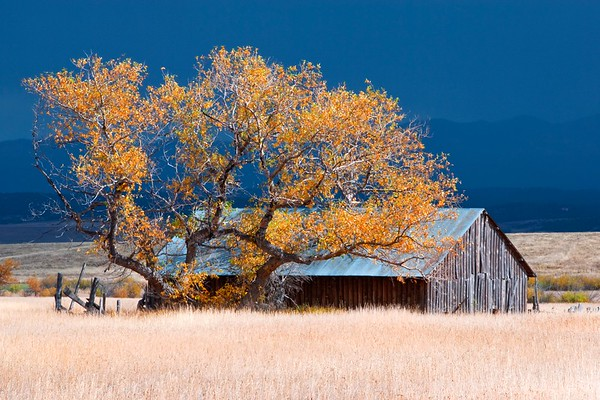 An old barn and a changing tree near Westcliffe, Colorado.  The dark rainclouds in the background had just spent the last hour or so passing by.  I'm glad I waited!  Got some very dramatic light on the barn.