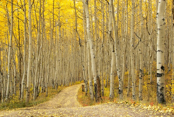 Along the Colorado Trail near Twin Lakes, Colorado.  There's this inviting bend in the road that always makes me wish I had a bike or a walking stick, to see what's up the way a bit.  Definitely a spot I return to year after year.