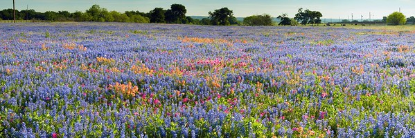 "An abundance of spring wildflowers near Bastrop, Texas.  One of those fields that you drive past and say, ""Whoa, I need to go back there!"""