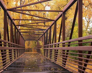 The bridge at Butterfly Woods Natural area, October 2010.