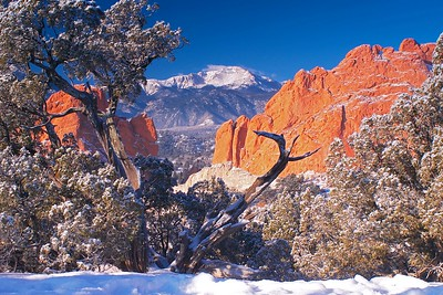 Pikes Peak and Garden of the Gods, framed by a juniper snag on a cold January morning in Colorado Springs, Colorado