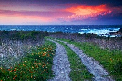 Poppies of spring line the doubletrack at sunset in Montana de Oro State Park, California.  My father-in-law and I found this spot earlier in the day.  As luck would have it, a thunderstorm rolled through perhaps 30 minutes before (providing the bright clouds at upper right).  The wind was blowing like crazy, so in the original photo, there was a good deal of blurring.  It's a fine photo, but in the name of artistry and fun, I ran some Photoshop painting filters on it until I had an effect I liked.