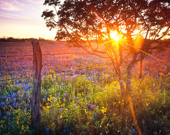 Woke up early on an April morning to catch the sunrise at a beautiful field we'd scouted the day before, close to Bastrop, Texas.  It was quite cool, probably around 40 degrees.  I love how the film's resolution preserves tiny foreground details like the heavy dew on the flowers.
