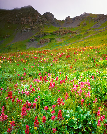 Clear Lake Basin, Colorado.  One of those times that made me glad I have a view camera!  I focused the camera such that the focal plane was lying right on top of the flowers, so they're as sharp and detailed at the bottom of the frame as they are two-thirds of the way in.  The resolution of the film does a fine job of showing the droplets of rain on the plants in the foreground.  I just love the feeling of abundant, prolific life that the mountains have in midsummer.